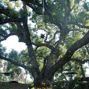 camphor tree cover